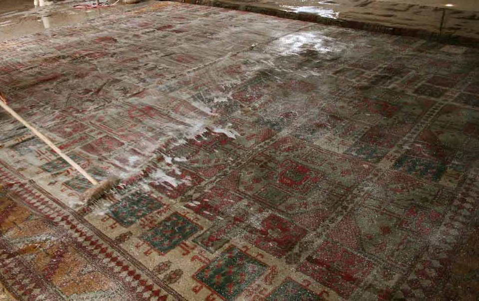 Shop Amara Rugs Area Rugs Professional Rug Cleaning In T